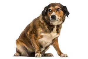 stress-dog