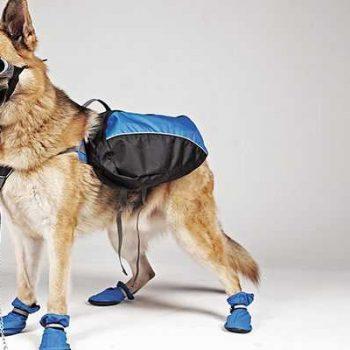 Vêtements & bottes pour chiens
