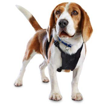 Colliers, harnais et laisses pour chiens